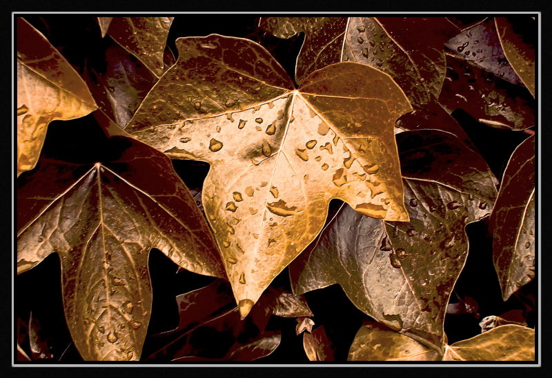 Hojas de oro / Golden leaves