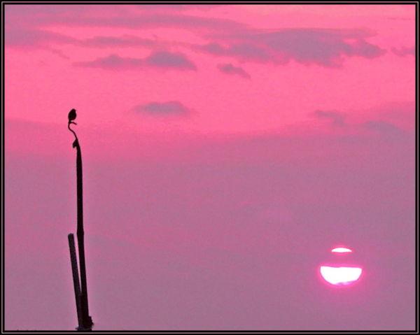 A bird, a sky