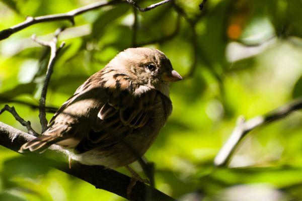 A sparrow's portrait