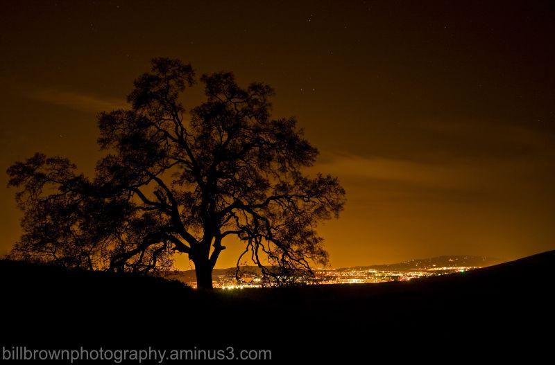 Oak Silouhette,  Pre-Dawn