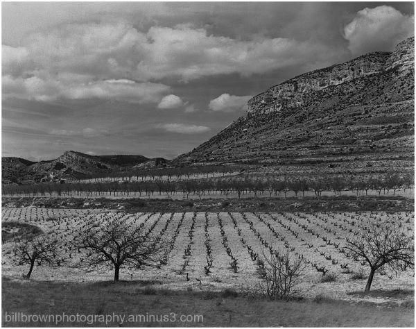 Spanish Grape Field
