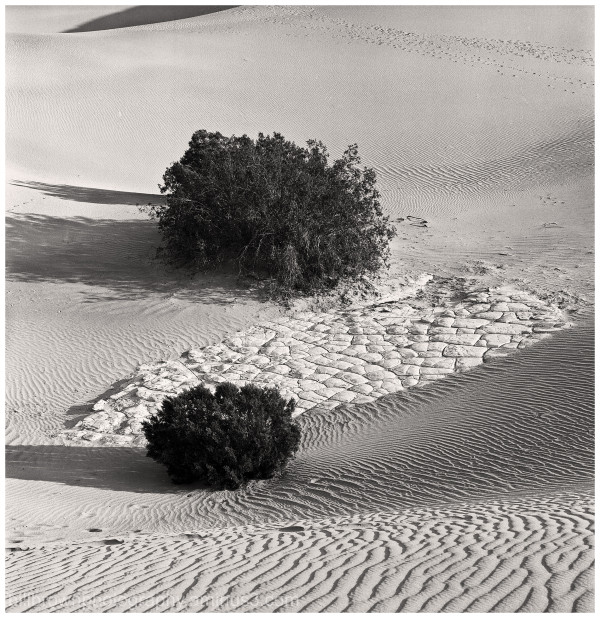 Death Valley - Sand Patterns and Bushes