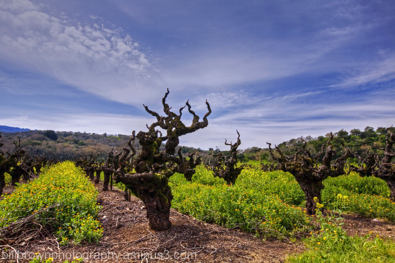 Vines and Clouds I