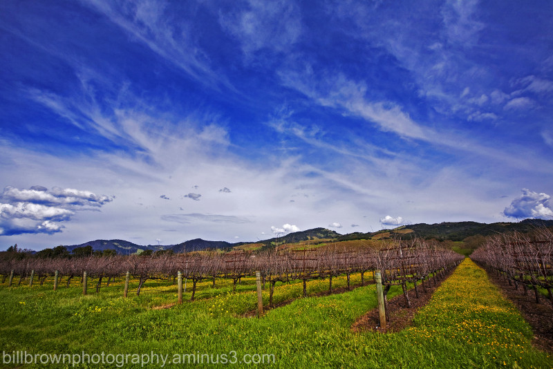 Vines and Clouds II
