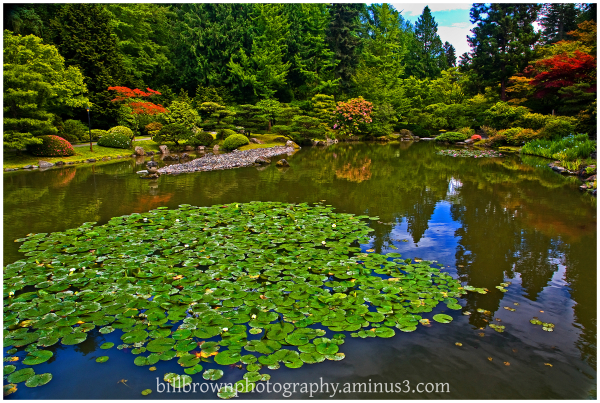 Japanese Gaarden Pond & Lily Pad