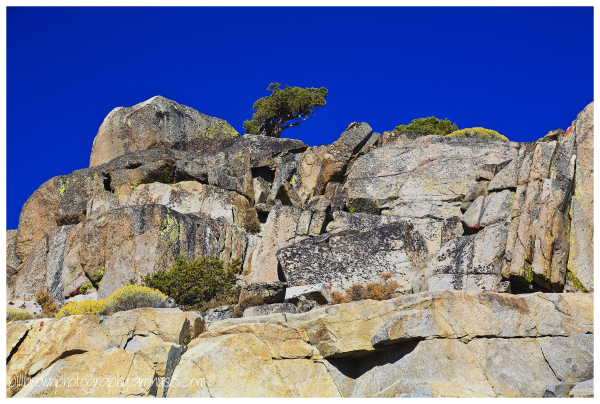 Tree and Rock Formations - Carson Pass