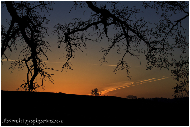 Oak Trees at Sunset