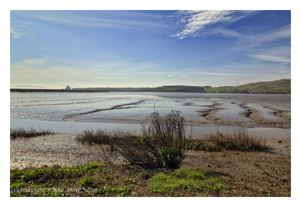 Return to Napa Sonoma Marsh   1 of 5