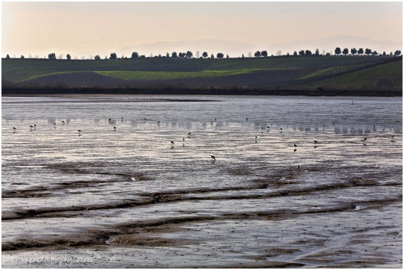 Return to Napa-Sonoma Marsh - 5 of 5