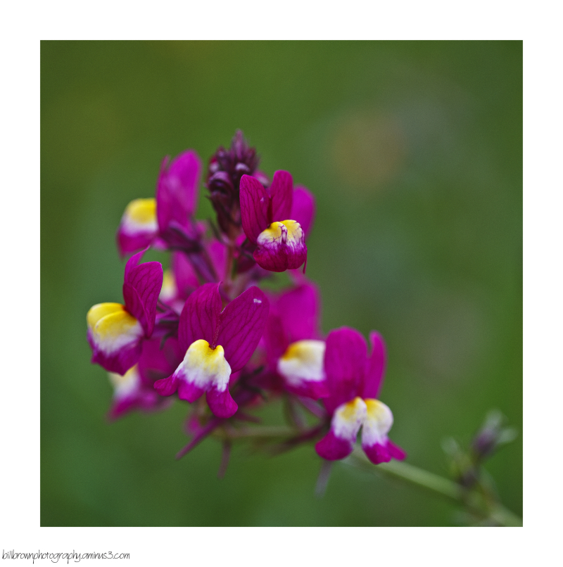 Early Spring Wild Flowers - 2 of 4