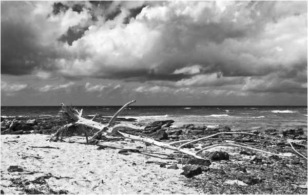 Fallen Tree on Beach