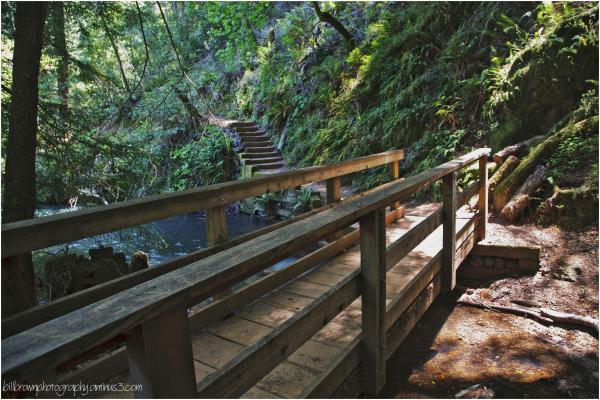 Foot Bridge & Steps