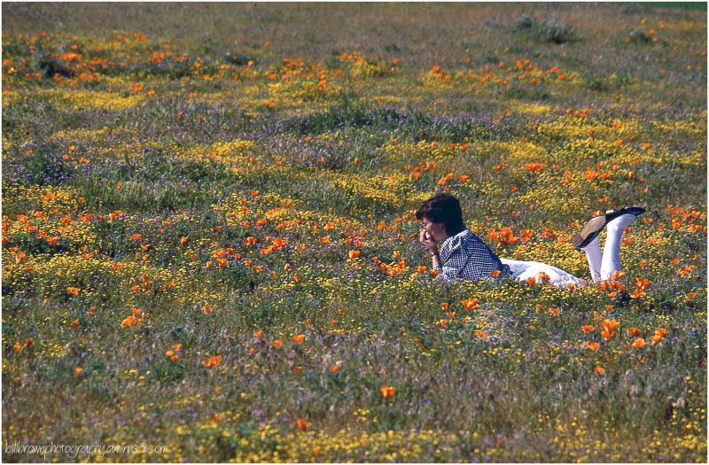 The Lady and Wildflowers