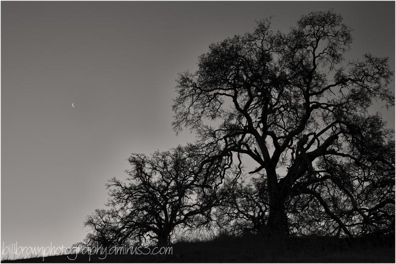 Cresent Moon & Oak - 2 of 4