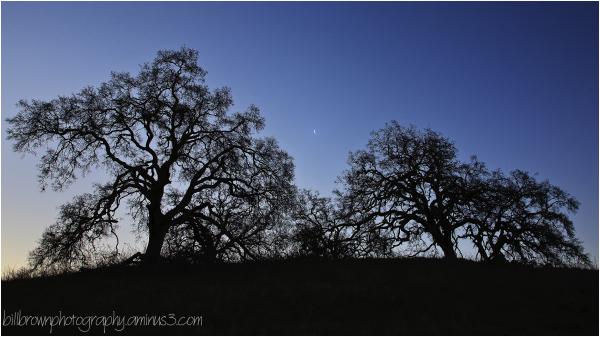 Cresent Moon & Oak - 3 of 4