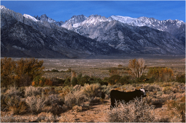 Eastern Sierra 1 of 6