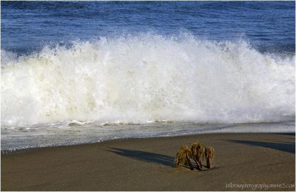 Marina State Beach 3 of 5
