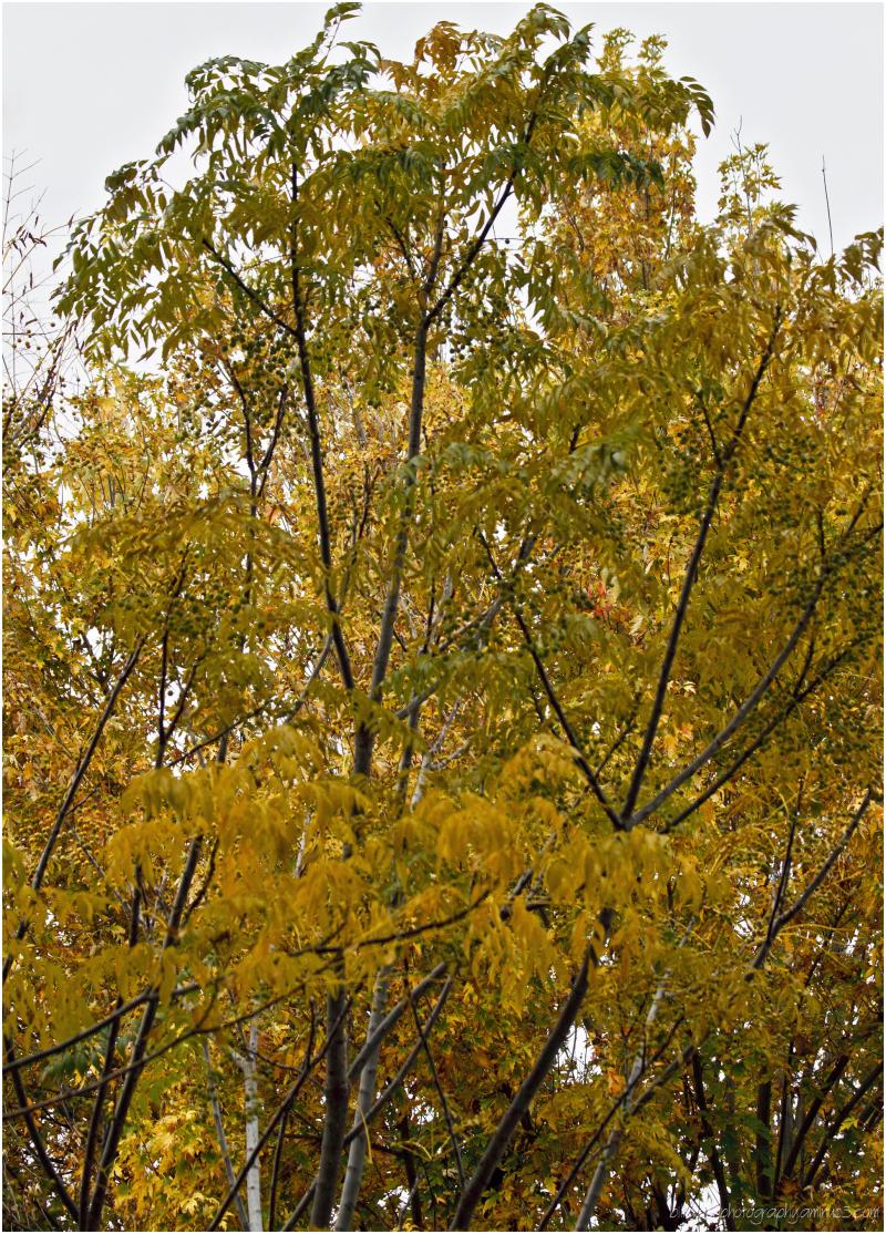 West Hills Autumn II