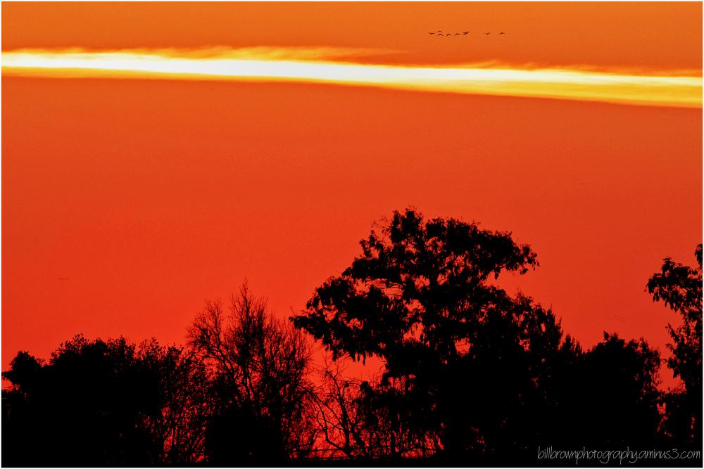 Sunset Flight II