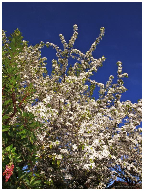 Early Spring II