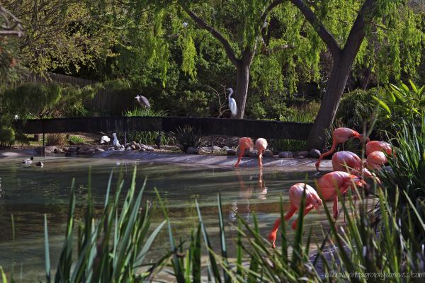 Flamingos Plus