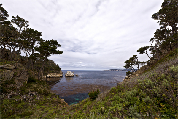 Bluefish Cove   Pt. Lobos