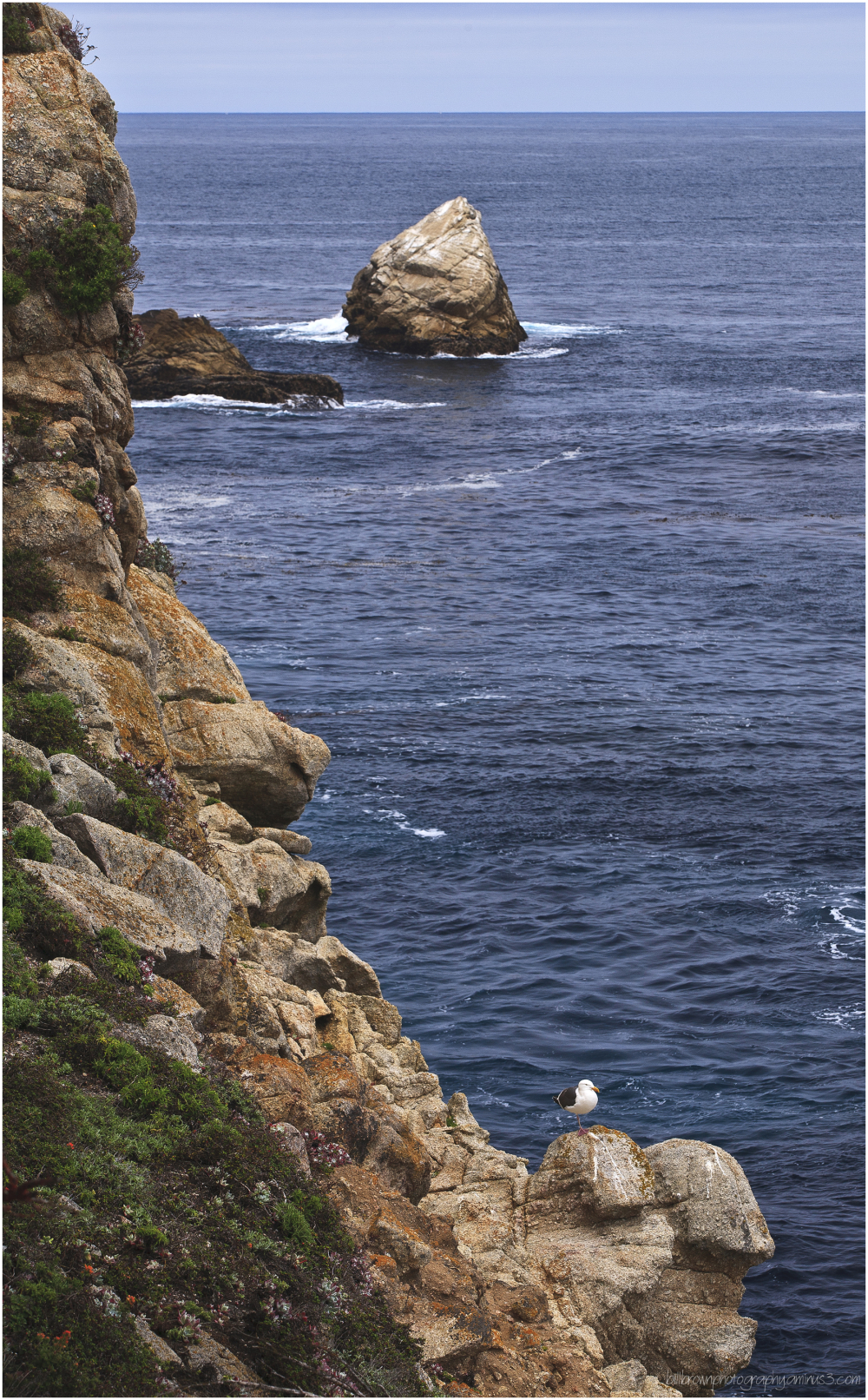 Gull and Sea Stack - Point Lobos