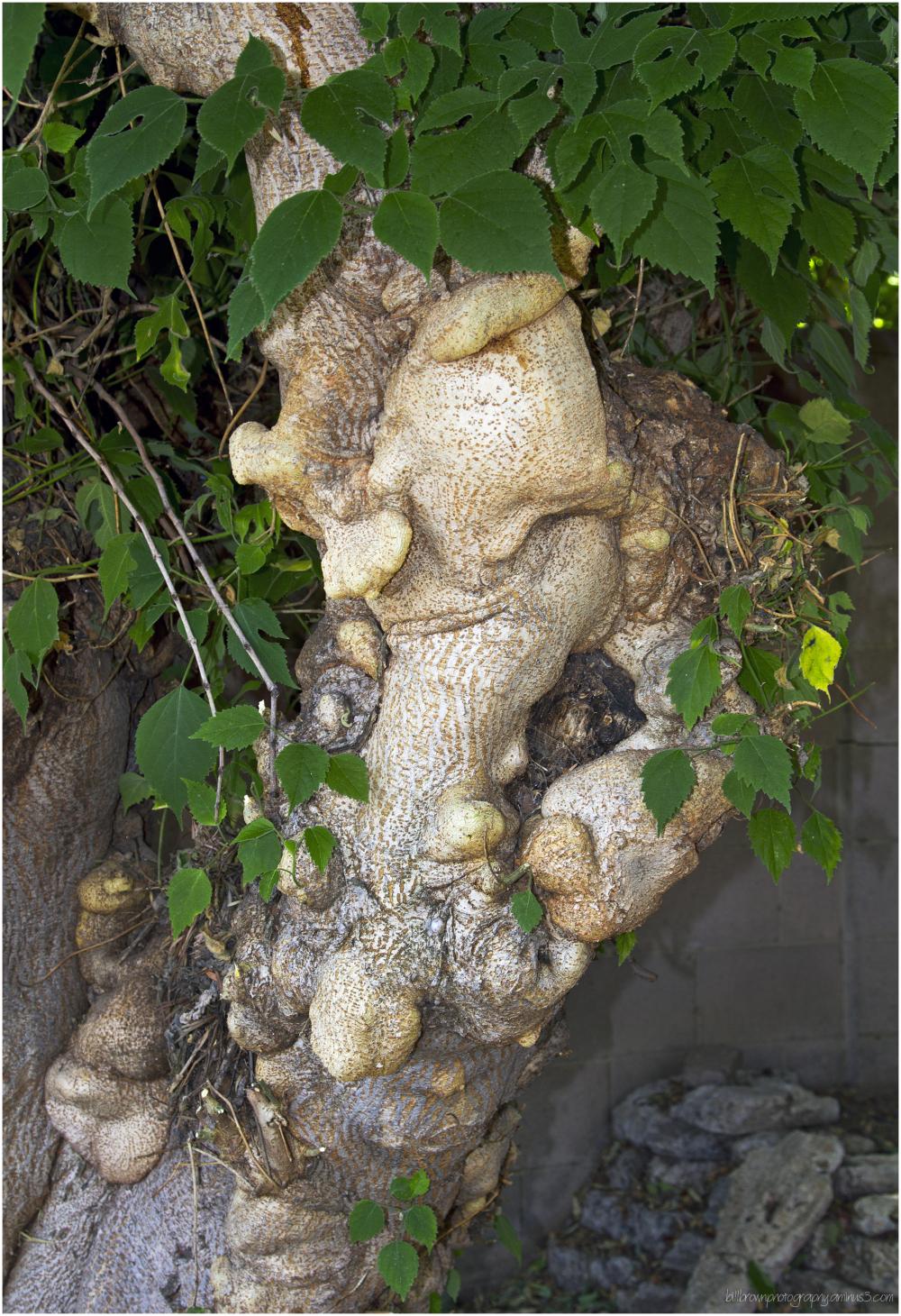 Strange Tree II