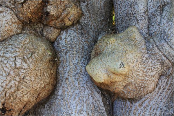 Strange Tree IV