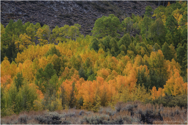 Autumn   Eastern Sierra No. 2