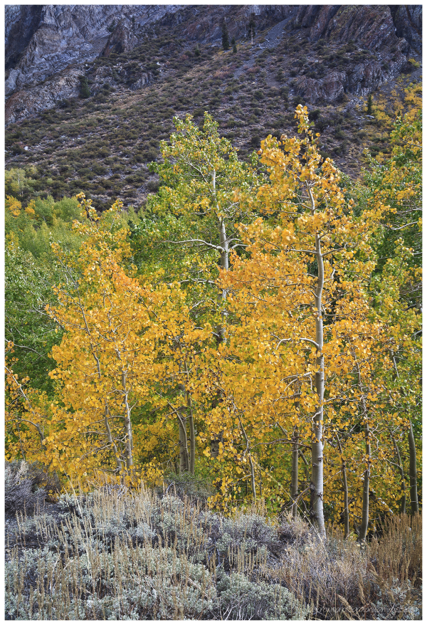 Fall Color Eastern Sierra   2 of 3