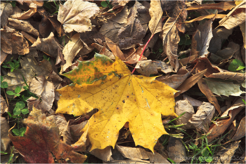 Autumn Leaves 112012