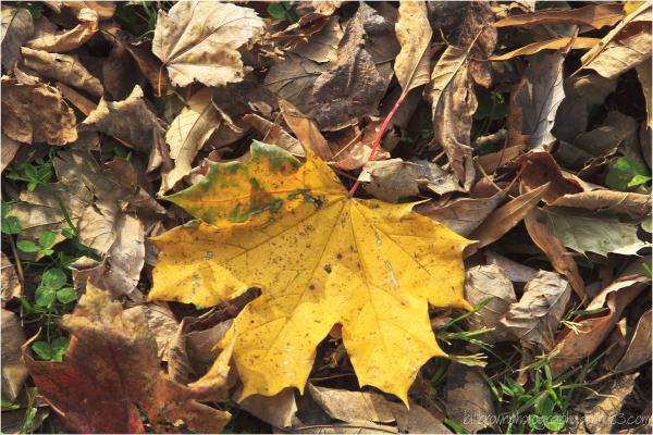 Autumn Leaves 112012