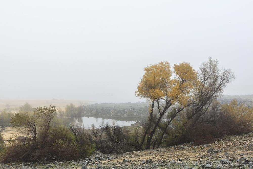 In the Fog - 3 of 3