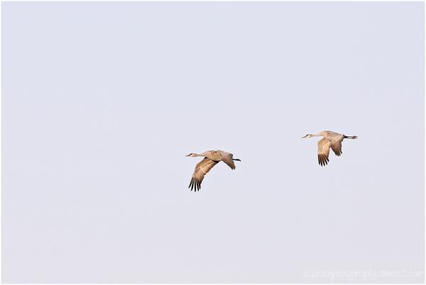 Flight of Two