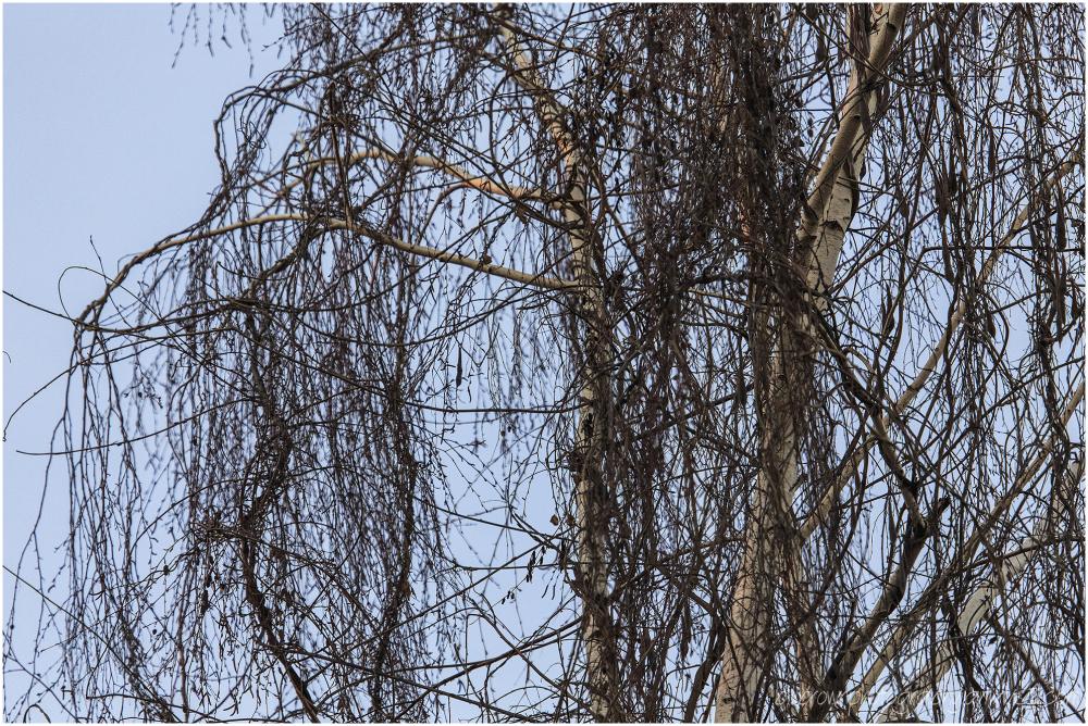 Vine Covered Tree - 2 of 3