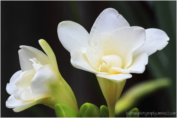 Spring Flowers - 4 of 5