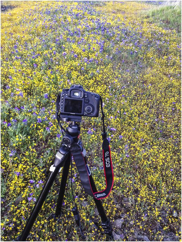 Table Mountain Wildflower Shoot