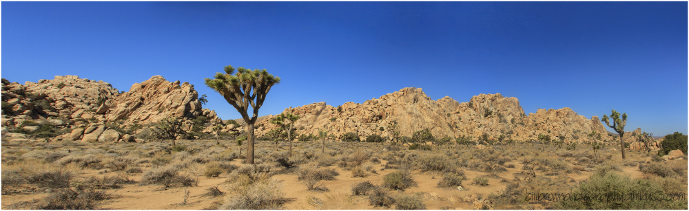 Joshua Tree NP Panorama