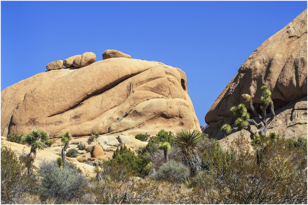 Joshua Tree NP Rock Formations #5