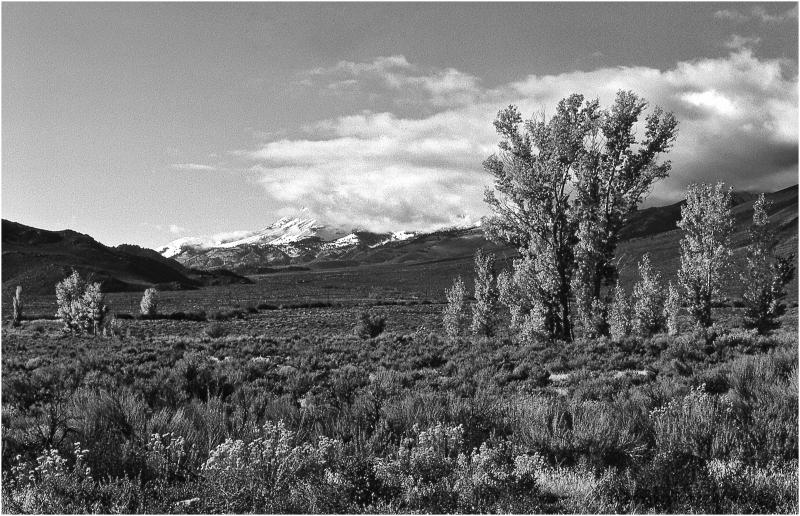 Eastern Sierra - Trees & Mountains