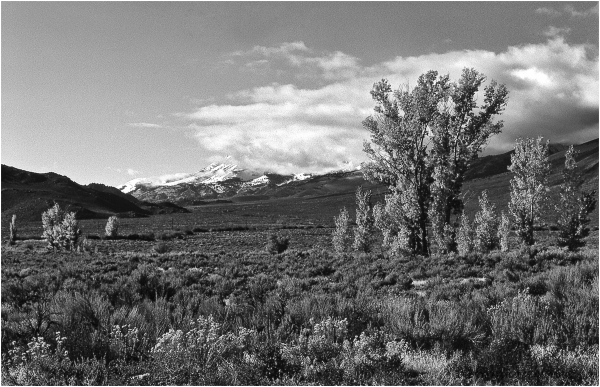Eastern Sierra   Trees & Mountains