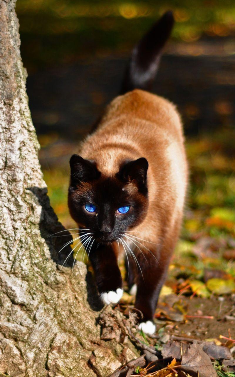 Blåå ögon