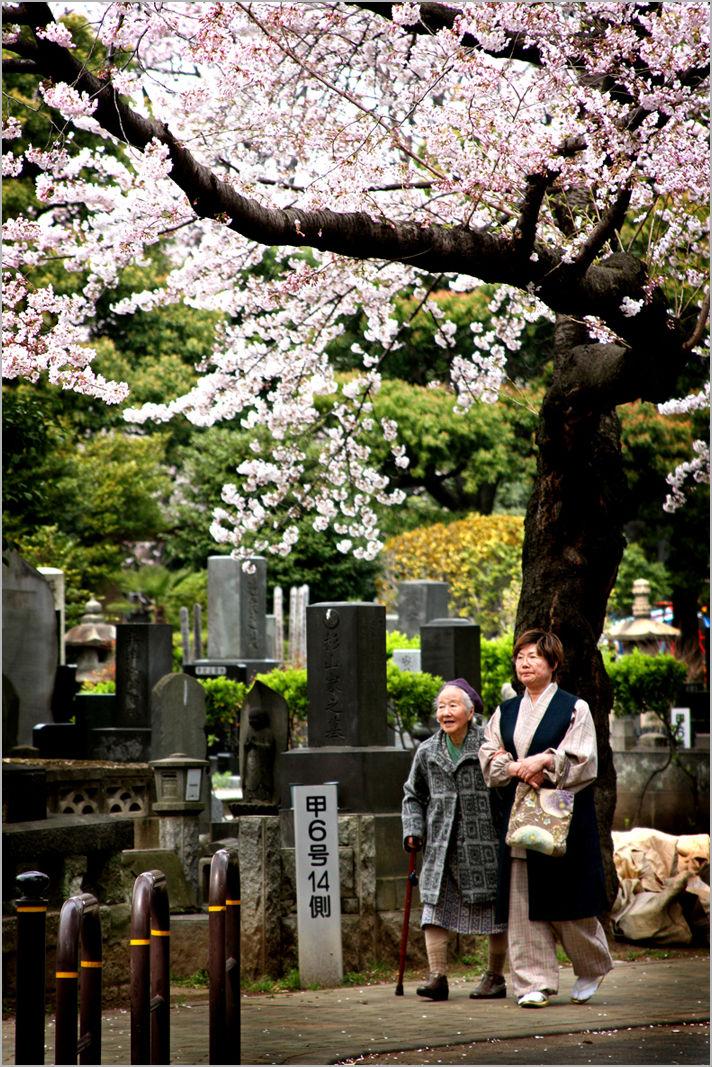 yanaka cemetery tokyo cherry blossom