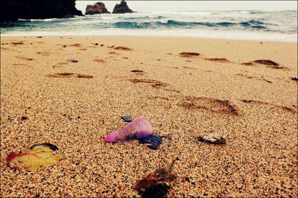 Jelly fish, beach Trinidad
