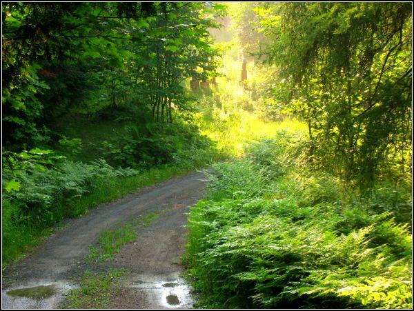 country walk, dappled sun