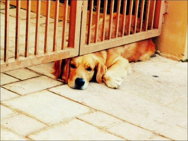 dog under gate