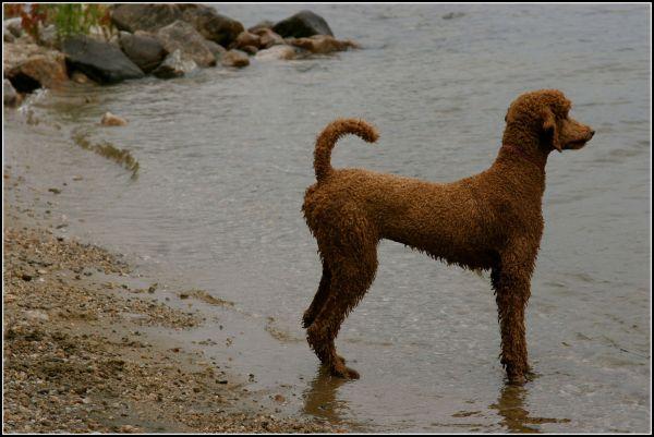wet dog at lake