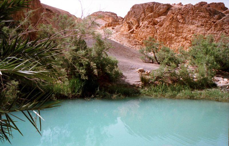 Oasis de Chebika (Tunisie)