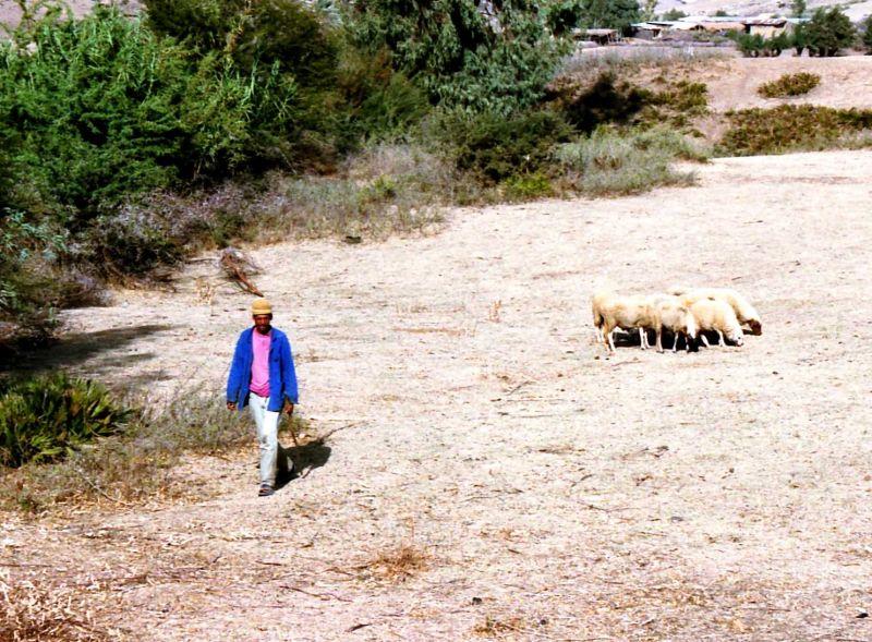 Berger (Rif marocain)
